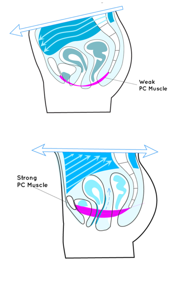 Exercises pc images muscle How to